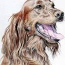 Дорогая собака
