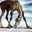 Как верблюд получил свой горб