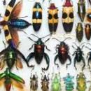 Собрание насекомых