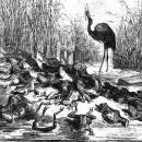 Лягушки, просящие Царя