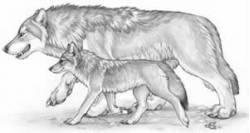 Волк и Волчонок