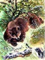 Сказка про Комара Комаровича - длинный нос и про мохнатого Мишу - короткий хвост