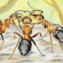 Анекдоты о муравьях