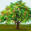 История одной яблоньки