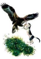 Орел и кошка