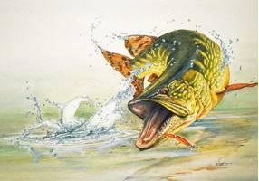 rybi dela