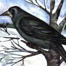Смышлёные птицы