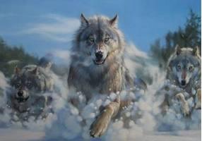 За волками