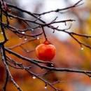 Яблоко в осеннем лесу