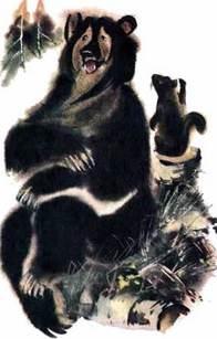 Кузяр-Бурундук и Инойка-Медведь рассказ Бианки