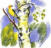 Лесные домишки сказка Бианки