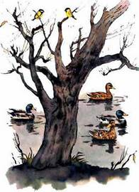 Синичкин календарь читать сказку Бианки