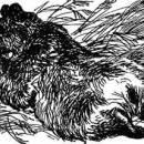 Как муха медведя от смерти спасла читать рассказ Бианки