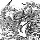 Почему чайки белые читать сказка Бианки