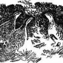 Тайна ночного леса читать сказка Бианки