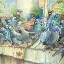 Домашние голуби и дикие голуби