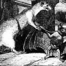 Летучая мышь и две ласочки