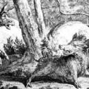 Лев и осел на охоте