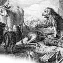 Львиный дележ