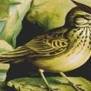 Птицелов и жаворонок