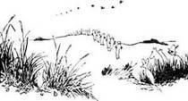 хатифнатты идут по дюнам